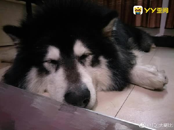 优米呼吁网友珍爱动物!